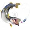 Pesci grandi
